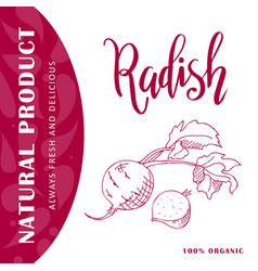 Vegetable element of radish hand drawn vector