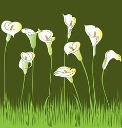 Calla garden vector