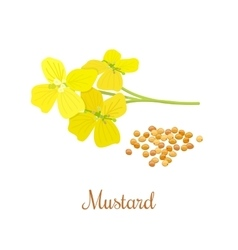 Mustard flower and seeds vector