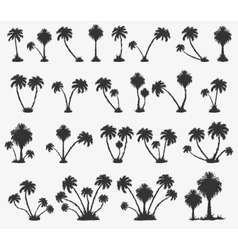 set of solar palm beach vector image