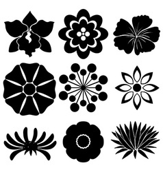 Group of floral templates vector