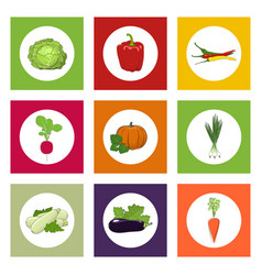 Round icons vegetables on color background vector