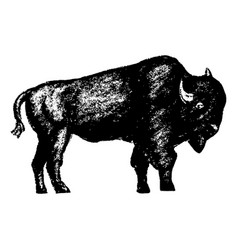 bison icon grunge style vector image