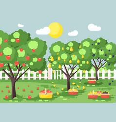 Cartoon harvesting ripe fruit vector