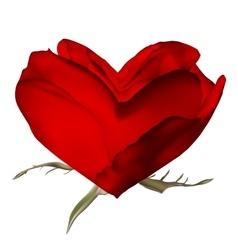 Stylish red rose isolated on white EPS 10 vector image