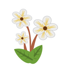 jasmine flower spring image vector image vector image