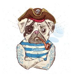 Pirate pug dog on blue background vector