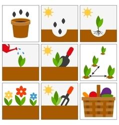 Groving sedlings seeds seedlings and harvest vector