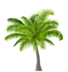 realistic palm tree isolated on white background vector image vector image