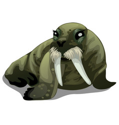 Serious old walrus with large tusks isolated vector