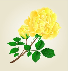 Yellow rose and rosebud stem with leaves vector