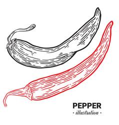 Chili pepper fresh food hand drawn vector