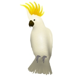 Cockatoo alba bird parrot character vector