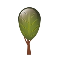 colorful tree with foliage shape leaf ovoid vector image vector image