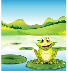 A frog above the waterlily in the pond vector image