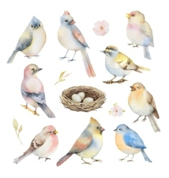 Watercolor set of birds vector