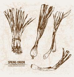 Digital detailed line art spring onion vector