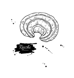 Reishi mushroom superfood drawing isolated vector