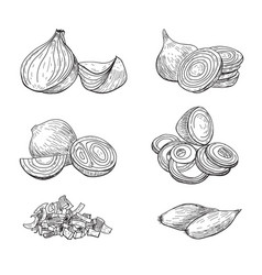 onion hand drawn set full rings and half vector image