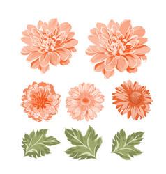 set of chrysanthemum flowers elements vector image