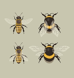 Bee and Bumblebee vector image vector image