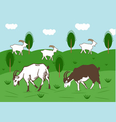 Domestic goats graze in a meadow in summer vector