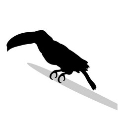 toucan bird black silhouette anima vector image