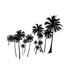 Icon palm tree vector