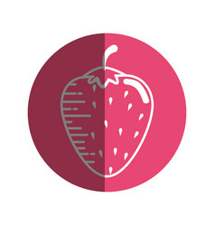Strawberry delicious fruit vector