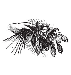 Hand holding flowers vintage engraving vector