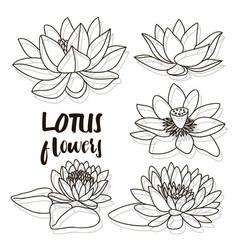 Set of lotus flowers vector