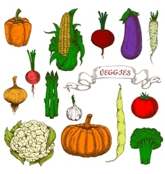 Bright vivid organically grown vegetables sketches vector
