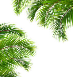 exotic frame with palm leaves place for your text vector image vector image