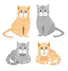 The red and gray cat sits and lies vector