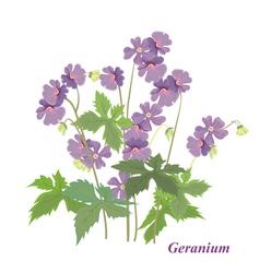 Bush geranium vector