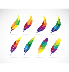 group of an feathers design vector image vector image