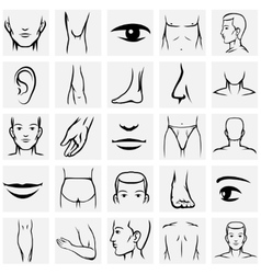 Male body parts icons set vector image vector image