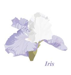 Delicate iris vector
