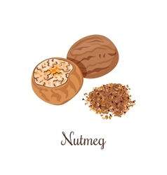 Nutmeg crushed spices vector