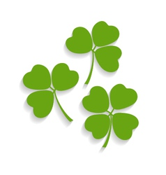 Shamrocks and the four leaf clover vector