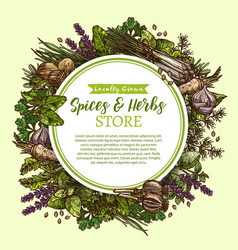 sketch poster for spices and herbs store vector image vector image