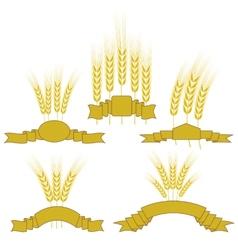 Wheats vector image