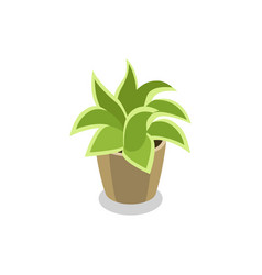 green plant in pot isometric 3d icon vector image