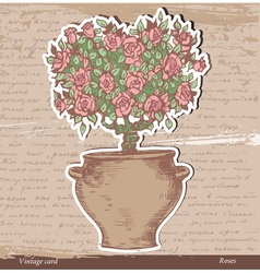Bush of roses vector image