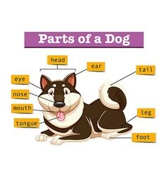 Diagram showing parts of dog vector