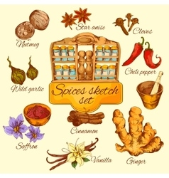 Spices sketch colored vector