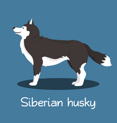 An depicting siberian husky dog cartoon vector