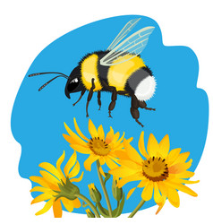 Bumble bee flying over yellow flowers on vector