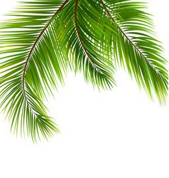 exotic tropical background with palm leaves vector image vector image