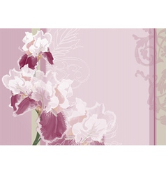 Irises on a pink background vector image vector image